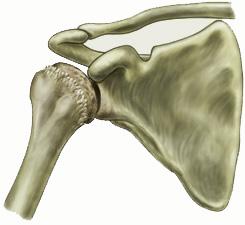 Οστεοαρθρίτιδα Του Ώμου